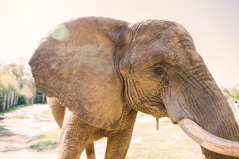Cameron Park Zoo Elephant Exhibit